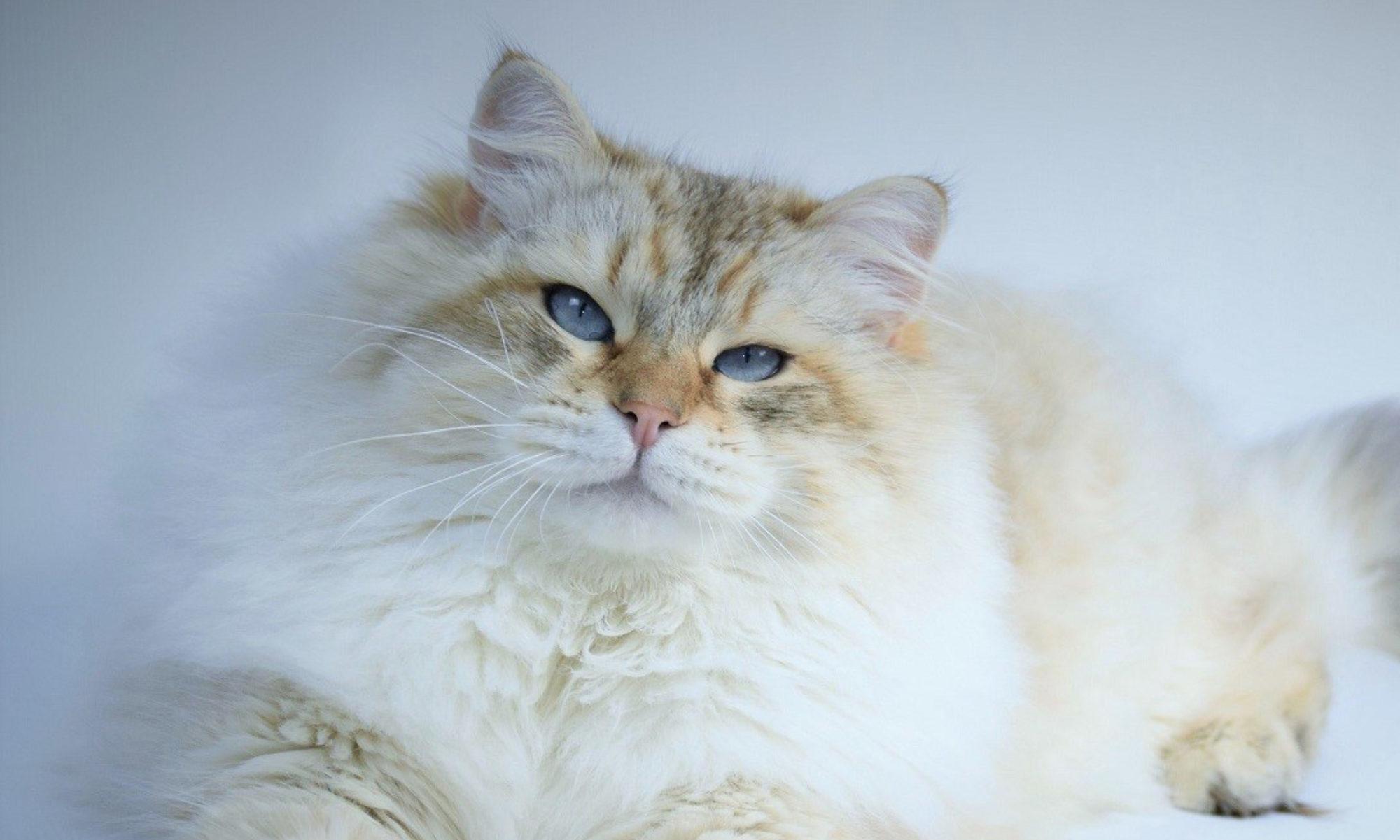 Cattery Gremlineva